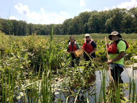 Volunteers collecting dragonfly larvae from wetlands