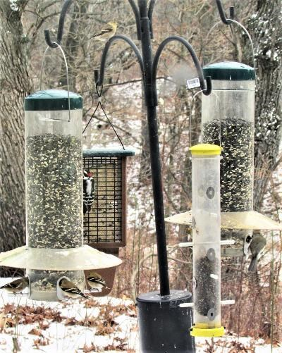 Birds feeding at the Douglas Center bird feeders