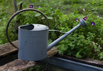 photo of a watering can