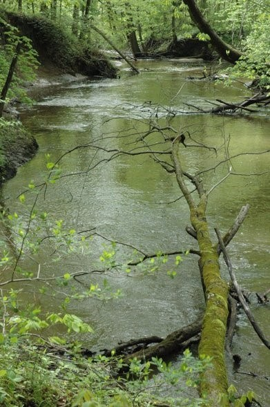 The Little Calumet River flows around fallen trees though a lush green woodland in the Heron Rookery.