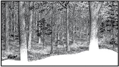 Hickory Trees