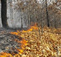Backing surface fire in a oak savanna