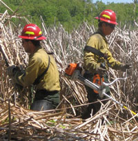 Firefighters brushcut a path through cattails