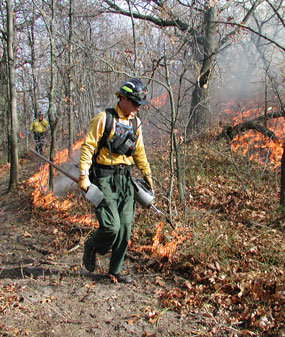 Firefighter walking with a drip torch igniting a prescribed fire