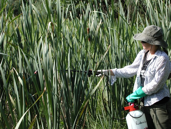 Worker sprays for invasive species.