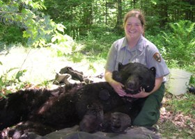 A student intern assists with bear research and is seen here holding a tranquilized 257 lb. black bear.