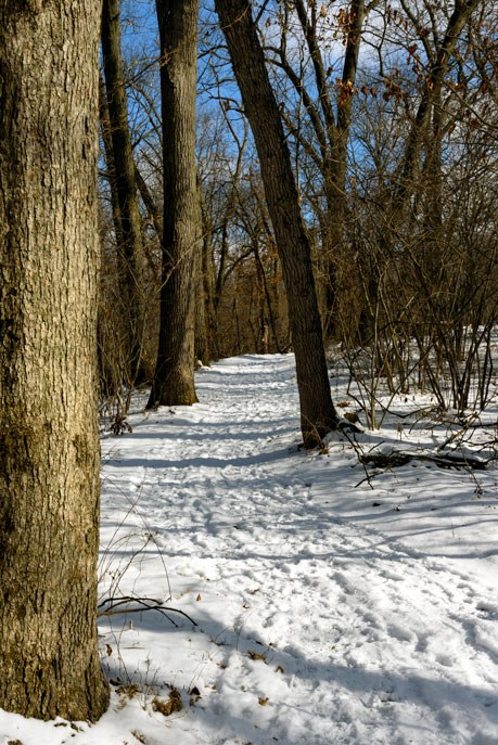 Calumet Dunes Trail in the winter