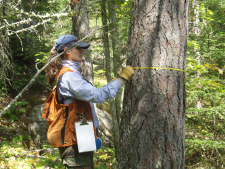 An Ecologist wraps a measuring tape around a tree trunk to measure tree diameter.