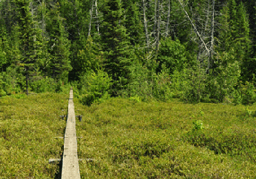 Bensen_Creek_bog_boardwalk