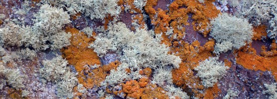 Lichens cover the bedrock