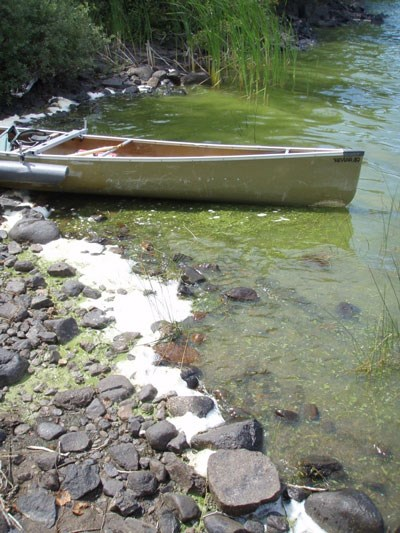Canoe at water's edge with blue-green algae bloom on lake's surface surrounding it.
