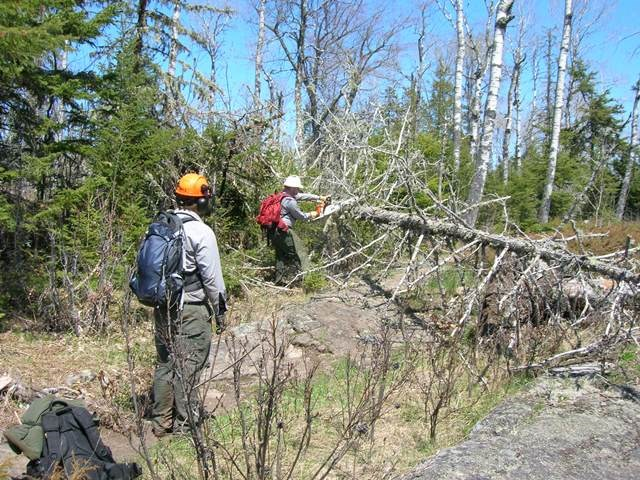 Park maintenance workers clear a downed tree with a chainsaw