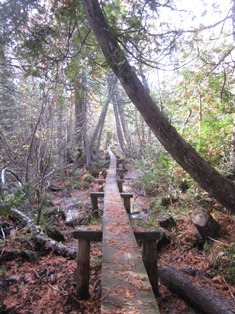 A long boardwalk can be found in a swamp marking the Minong Ridge Trail