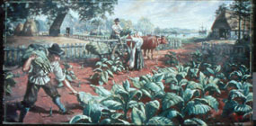 The English harvesting the cash crop tobacco.