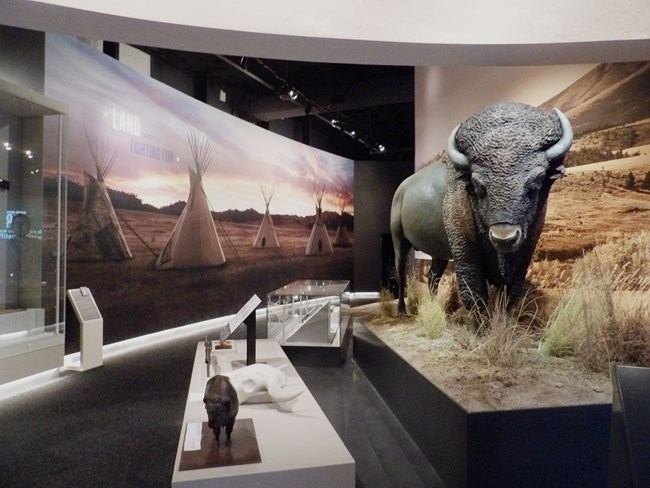 bison model in New Frontiers Gallery