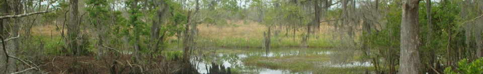 Image of swamp, bayou, and marsh
