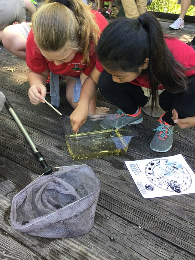 Girls look for insects in a pan of water