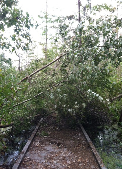 Image of downed trees and branches over a boardwalk trail
