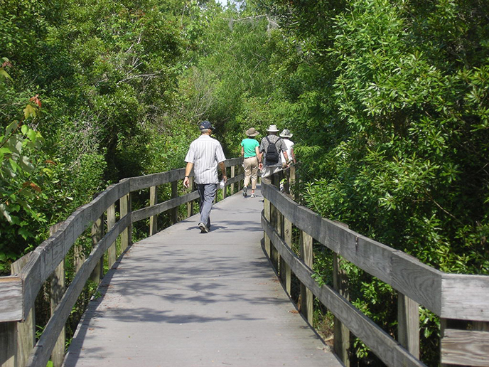 People walk on a boardwalk trail with trees on either side
