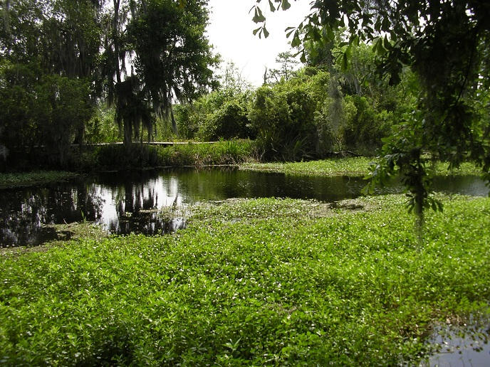 View across bayou toward boardwalk and trees on other side