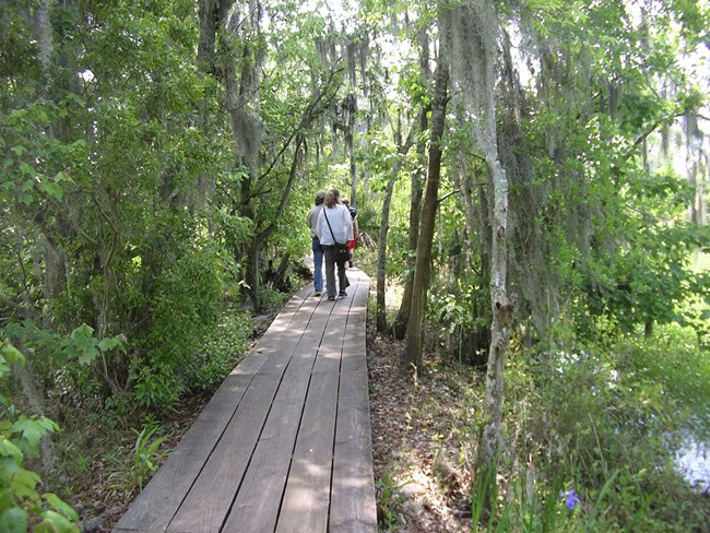 People walk on a boardwalk trail through the swamp
