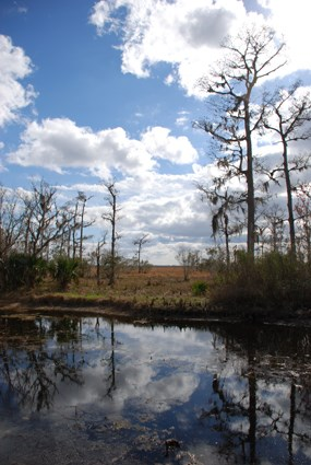 Blue sky is reflected in a bayou ringed with baldcypress trees and marsh grasses