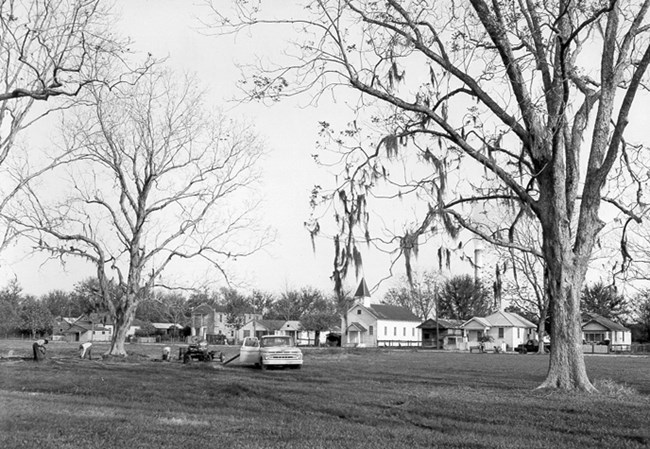 Image of houses with tall pecan trees in the foreground