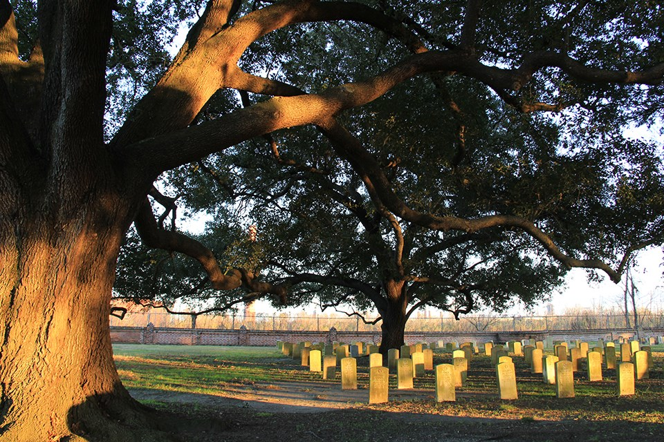 Live oak tree frames view of headstones