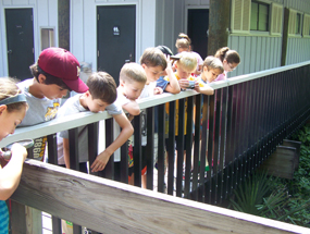 A group of children look over a railing at the plants below