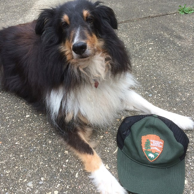 Dog laying down next to National Park Service ballcap