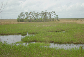 Bayou winds through a green marsh with trees on the horizon