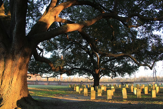 Live oak trees shade Chalmette National Cemetery headstones