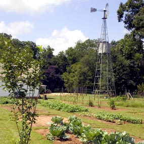 Garden and windmill