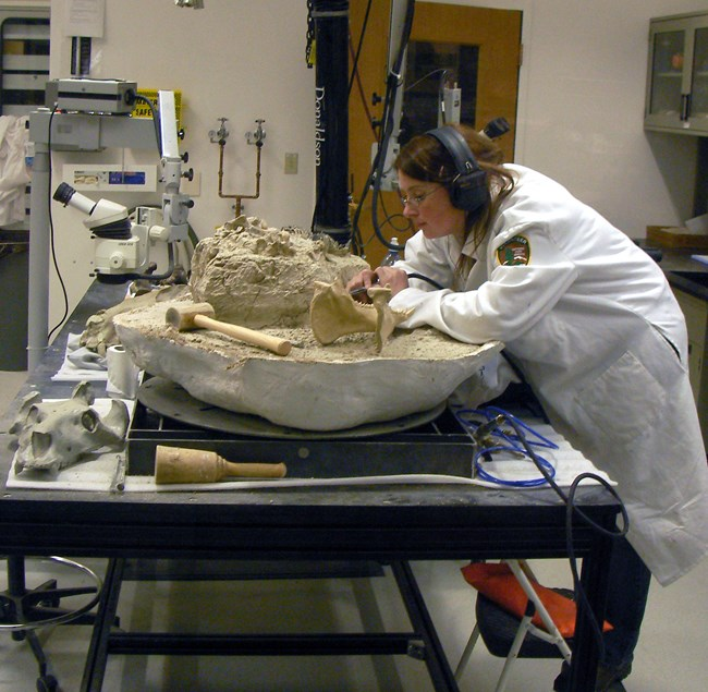 A fossil preparator, with a long white coat and protective ear covers, works in the lab at the Thomas Condon Paleontology Center on a large jacket.