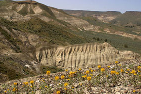 Image of the Mascall Formation ash beds.