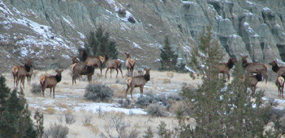 Image of elk near blue basin.