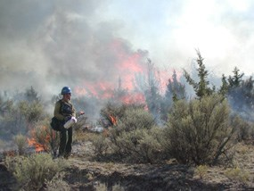 Image of a fire fighter working on a prescribed fire.