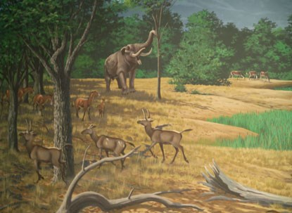 Image from the mural depicting the Mascall paleoecology.