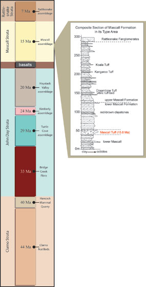 Image of timeline with the Mascall Formation highlighted.