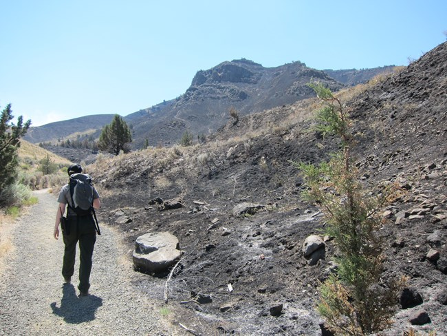 A ranger walks on a trail through the aftermath of a fire. Blackened earth dominates the right side of the photo.