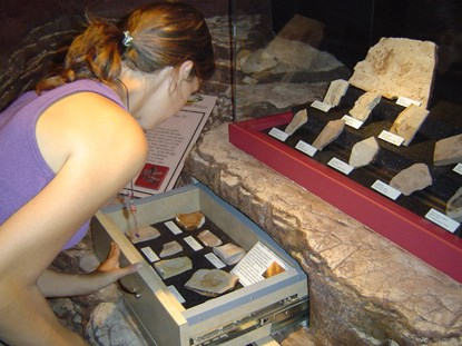 A woman looks into a drawer with plant fossils. Additional plant fossils are visible in a display above the drawer.