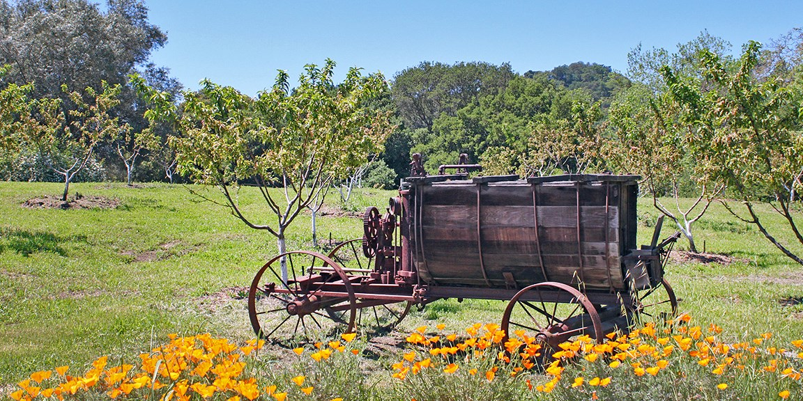 An old Copper Sprayer with wheels, sits in the peach orchard.
