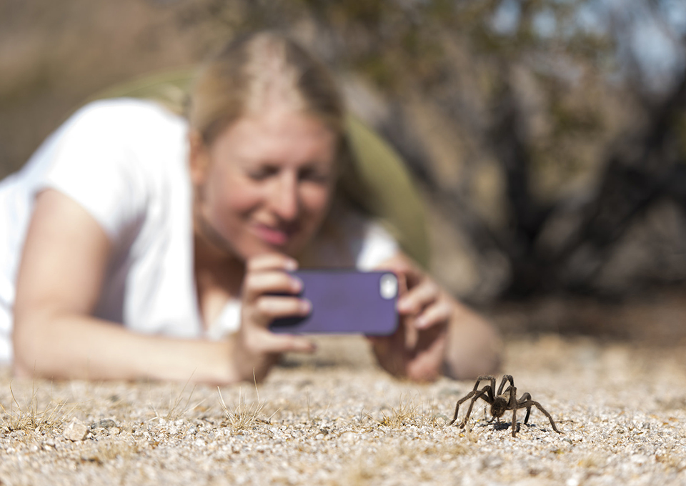 a young woman uses a smartphone to take a photo of a tartantula from several feet away