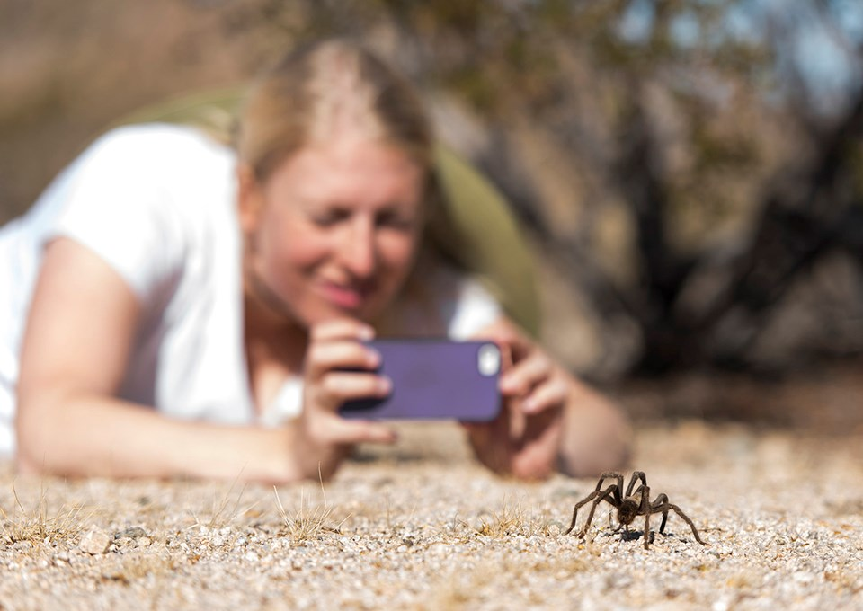 a young woman laying on the ground to taking a photo of a tarantula with a smartphone