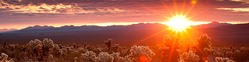 Sunrise at the Cholla Cactus Garden