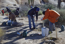 volunteers plant and water new plants to restore an area damaged by social trails