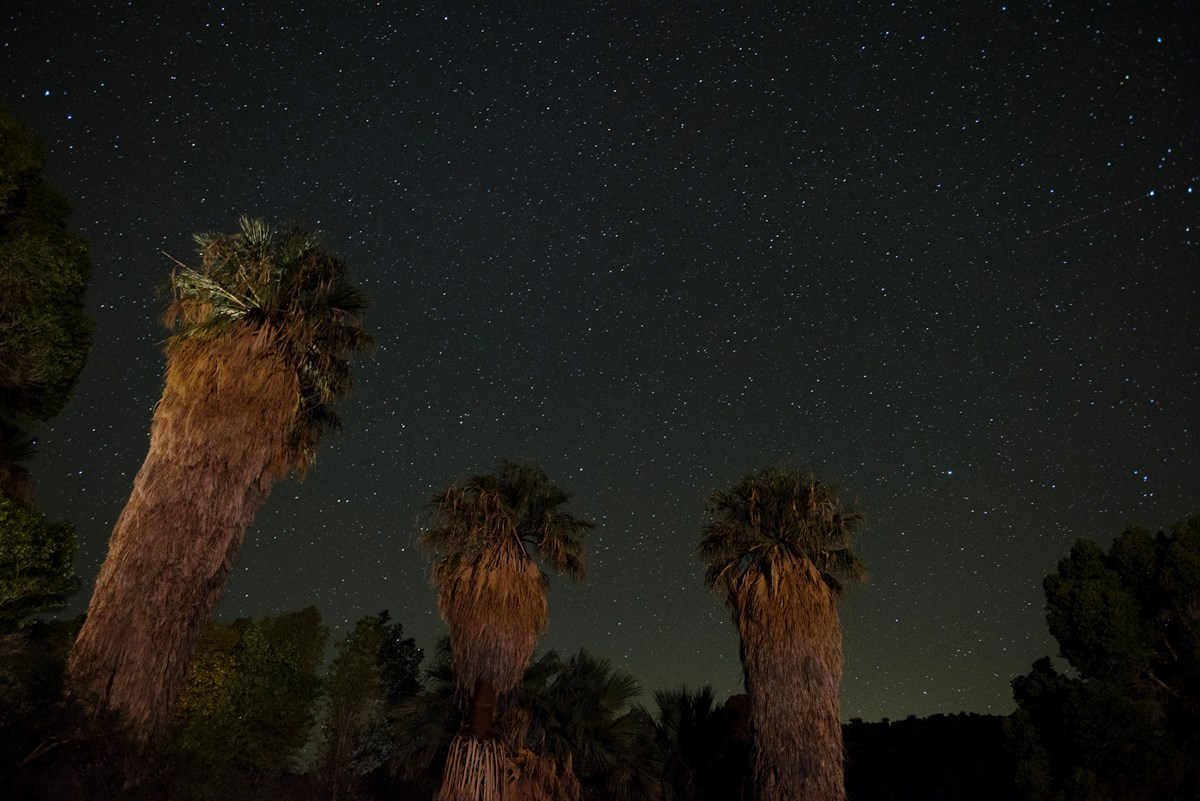 Large palm trees are lit up by artificial light with a starry sky behind them.