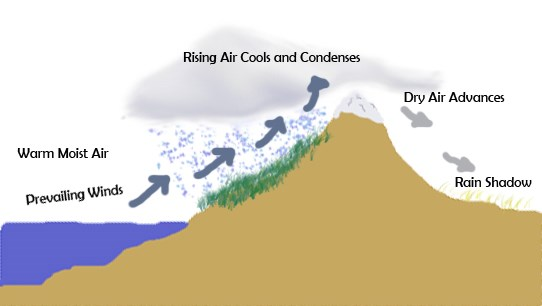 Illustration: warm moist air coming off the ocean, pushed by winds, up a mountain slope. Rising air cools and condenses and rain falls, making the oceanside of the mountain green and lush. Air advancing is now dry on the shadow side. Public domain