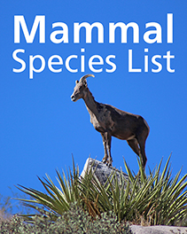 "overlay text ""Mammal Species List"" over a female bighorn sheep perched on a rock outcrop"