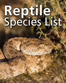 "overlay text ""Reptile Species List"" above close-up of a coiled speckled rattlesnake"
